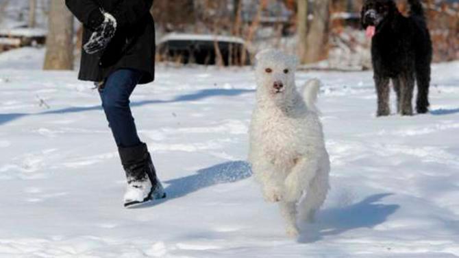 Estos perritos ayudan a anciana de las bajas temperaturas en Estados Unidos