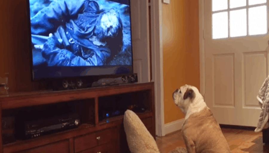 Perro fanático de Leonardo DiCaprio demostró su admiración por su papel en 'El Renacido' [VÍDEO]