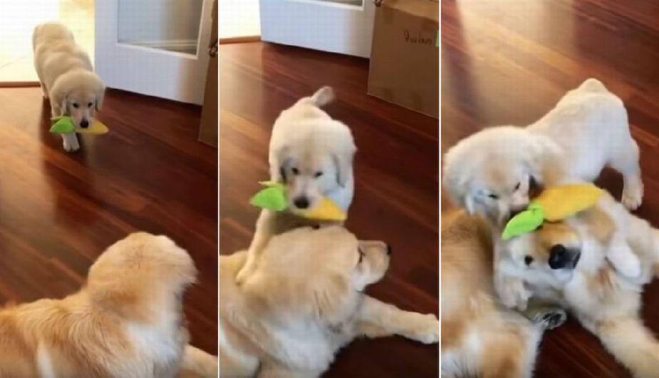 Cachorro le pide a su papá que juegue con él de la manera más tierna
