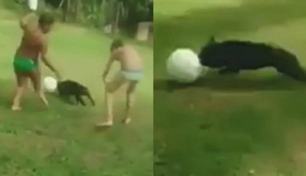 Perro y su habilidad con el balón ha sorprendido a todos en la red