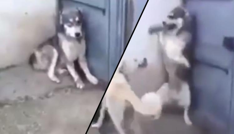 Esto hizo una madre de dos cachorros al ver que su pareja los hizo llorar