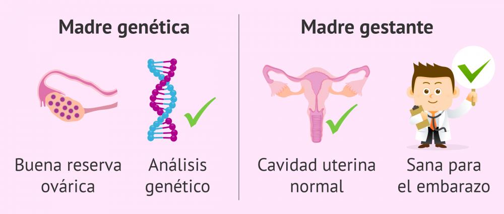 fertilizacion in vitro
