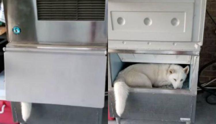 Perro aparece en la máquina de hielo y cibernautas quedan asombrados