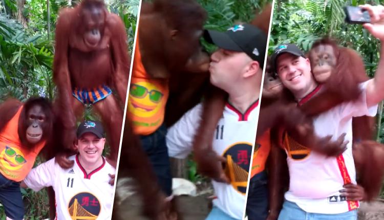 Orangutanes se 'roban' el corazón de turista por el cálido cariño que recibe