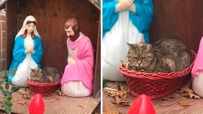 Un gato gruñon en pesebre de navidad