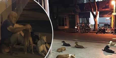 Hombre fue llevado de emergencia a un hospital y sus seis perritos lo esperaron en la puerta