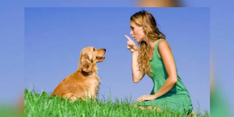 Estudio asegura que los perros entienden cuando sus dueños les hablan