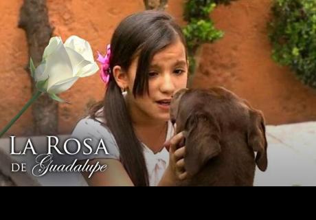 ¡No es un milagro! 'La rosa de Guadalupe' bate increíble record