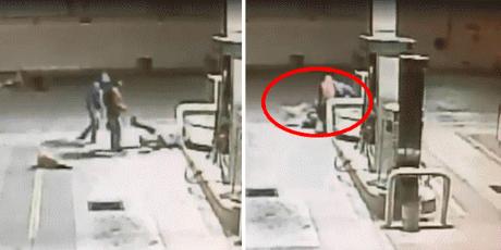 Perro callejero evita asalto en gasolinera y recibe agradable premio