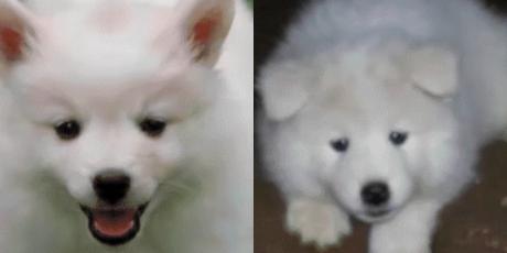Adquirió un lindo perro bebé y semanas después se enteró su secreto
