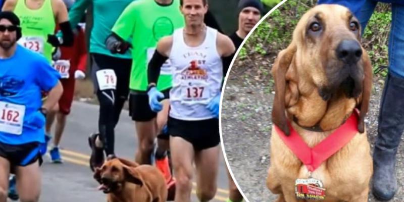 Perrita se coló en una maratón y quedó en el séptimo lugar