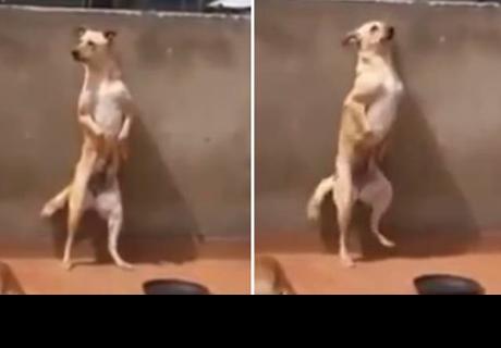 YouTube: Perro que baila 'Scooby Doo PaPa' oculta oscuro secreto [VÍDEO]