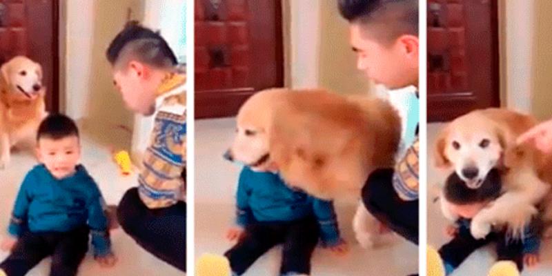 Perro defiende al hijo de su dueño de ser 'castigado'