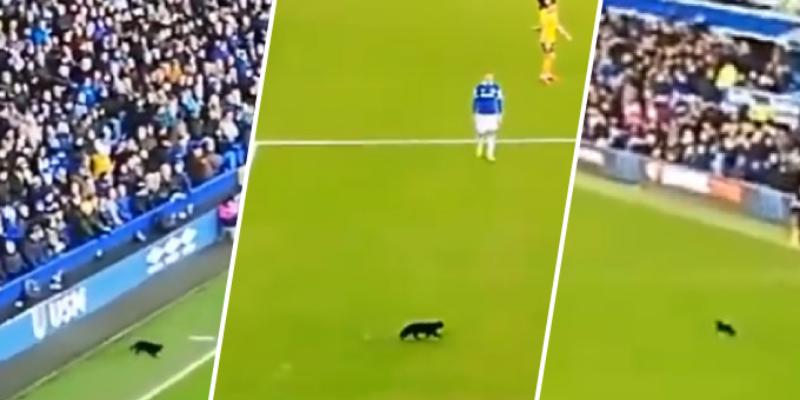 Gato interrumpe un partido de la Premier League y sorprende a todos en la red
