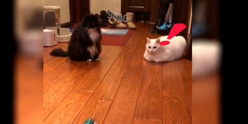 Dos gatos dan el salto de su vida por una rana de juguete