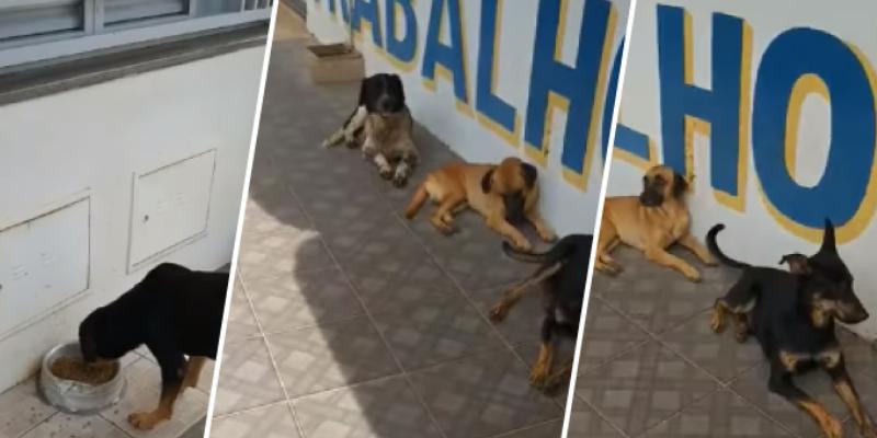 Perritos de la calle hacen su cola para comer y sorprenden a todos en la red