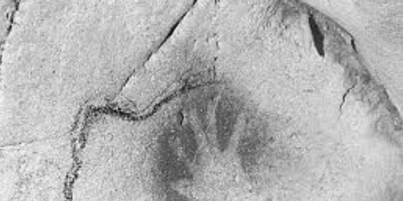 Joven halla el fósil de una criatura de 185 millones de años