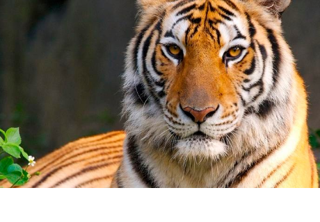Iban a capturar a 'tigre' en granja, pero cometieron vergonzoso error