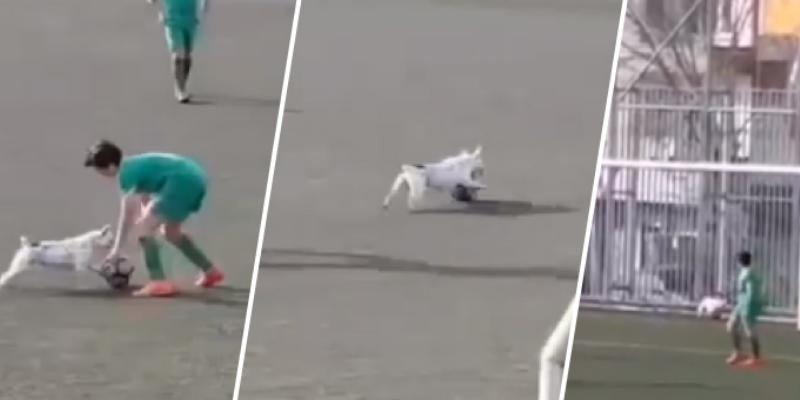 Perrito interrumpe partido de fútbol y sorprende con su habilidad para dominar el balón
