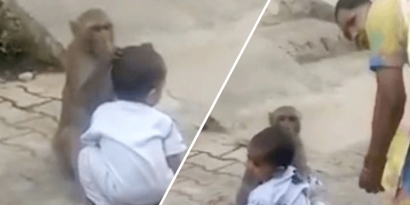 Mono quiere seguir jugando con bebé y no deja que la madre se le acerque