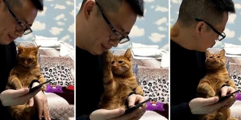 Gato tuvo tierna reacción al ver que su dueño no le daba cariño