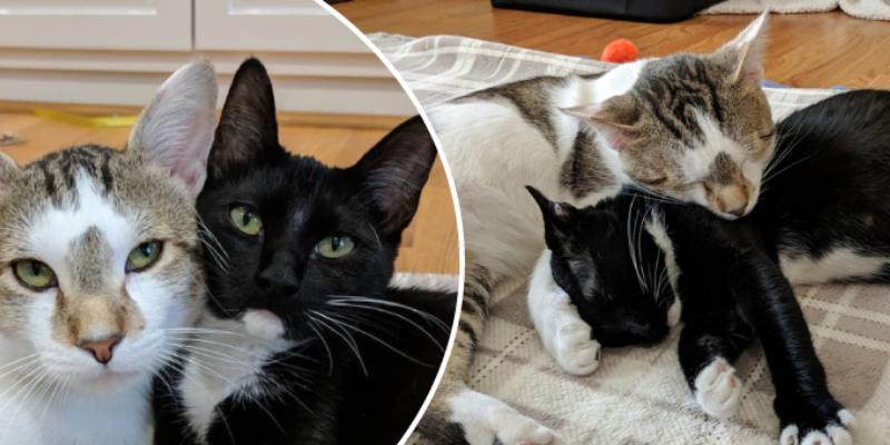 Pareja de gatitos permanecieron abrazados hasta que nacieran sus hijitos