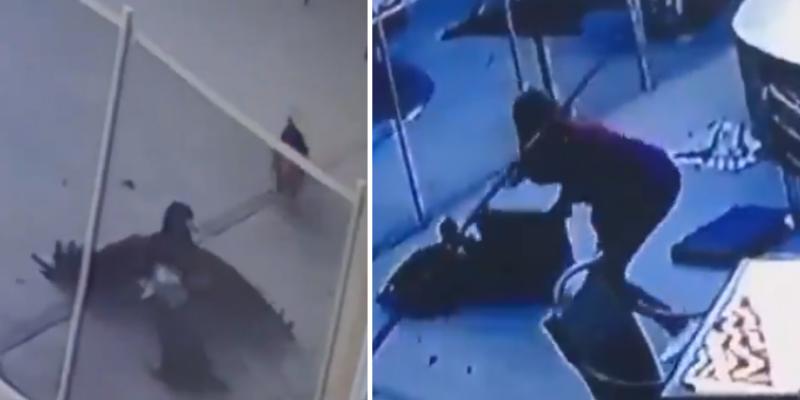 Halcón intenta llevarse a una perrita, pero mujer hace lo impensado para evitarlo