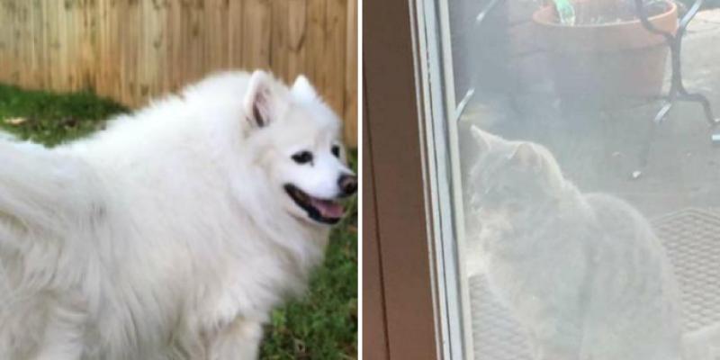Gatita sigue visitando la casa de su mejor amiga sin saber que está en el 'más allá'