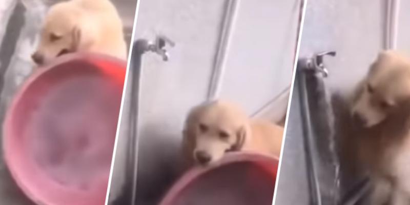 Perrito prepara su propio baño y cibernautas quedan sorprendidos