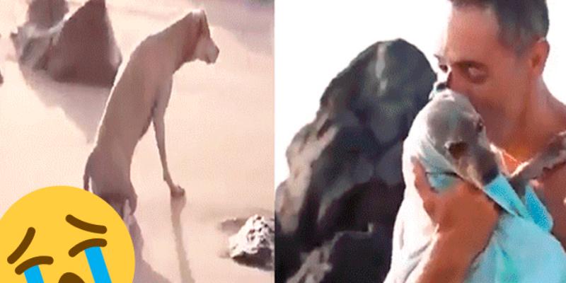 Joven rescata a perro que no podía caminar y lo ayuda con terapias