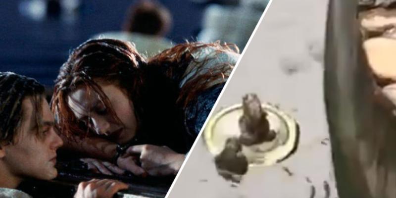 Ranas se suben a una tapa de plástico al estilo Titanic y cibernautas estallan de risa