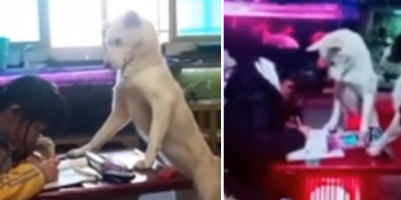 Niña hace sus tareas en compañía de su perro para que no se distraiga con celular