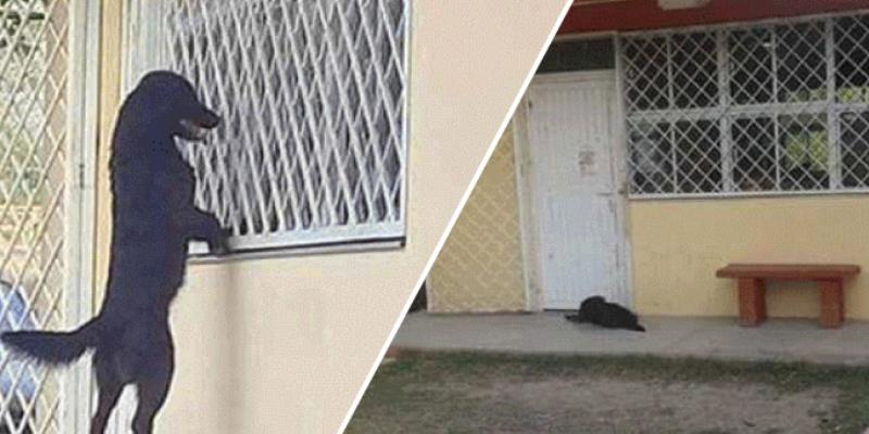 Perrito va a la escuela de su amo para verlo por la ventana y usuarios quedan enternecidos