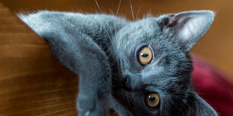 Gato intenta dar un grande salto pero un error lo hizo viral