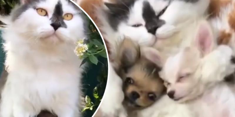 Gata cuida a cachorro como si fuese su cría y cibernautas estallan de ternura