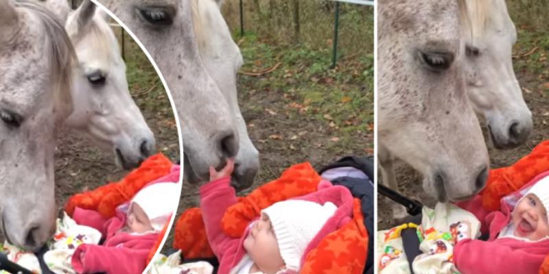 Caballo y bebé protagonizan tierno vídeo y se vuelven buenos amigos