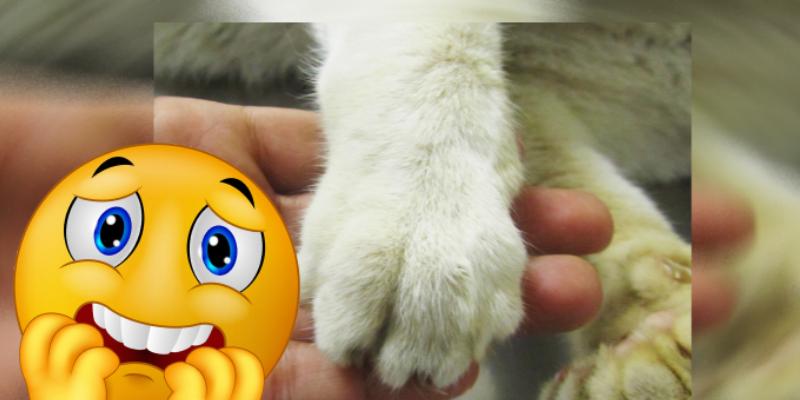 Adolescente acusó a su gato de querer mandarlo a mejor vida y se comprobó que es verdad