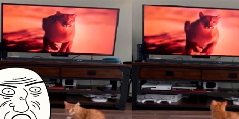 Joven hace que su gato actúe como un puma y su reacción sorprende