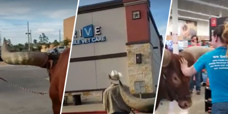 Hombre decidió entrar con su buey a una tienda y empleados quedaron asombrados