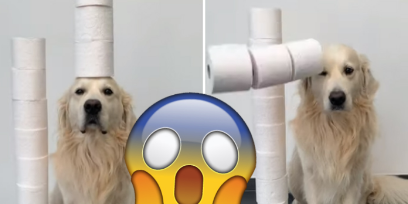 Hombre graba a su perro realizando un reto viral y su equilibrio sorprendió a todos