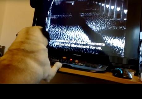 Le enseña al perro de su novia un saludo nazi y ahora podría ir preso