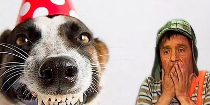 Celebran el cumpleaños de un perrito con temática del 'Chavo del 8'