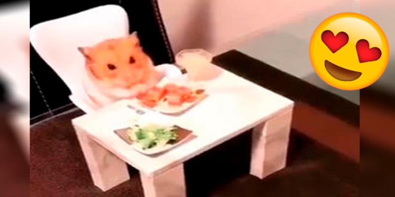 Adorable hámster sorprende cenando en una diminuta mesa