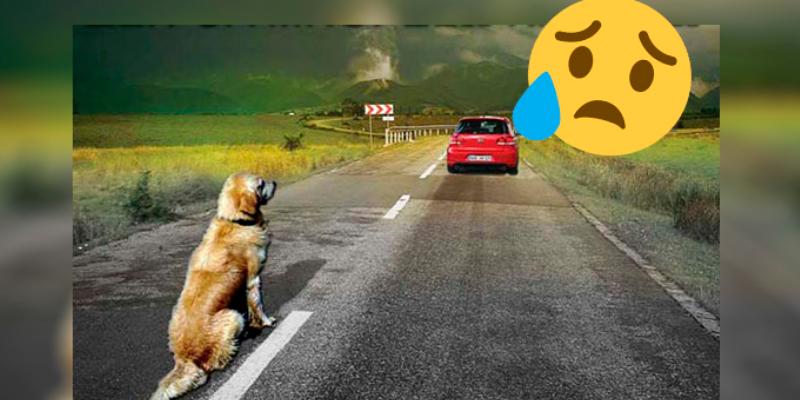 Perrito persigue carro de sus dueños tras ser abandonado