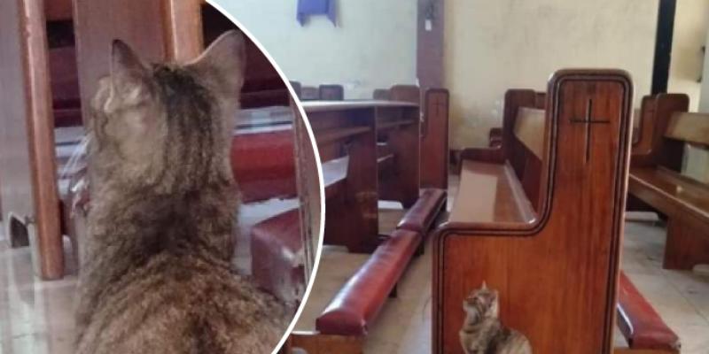 Gato se escapa de la casa de su dueño y lo encuentra en una iglesia