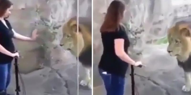 Mujer en la dulce espera se acerca a león y este la mira tiernamente