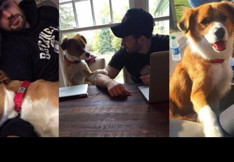 Chris Evans compartió un video de su debilidad por los perros de rescate