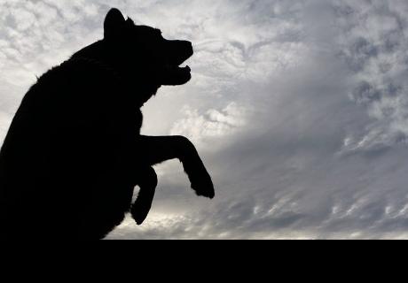 Extraña criatura causa terror en Argentina