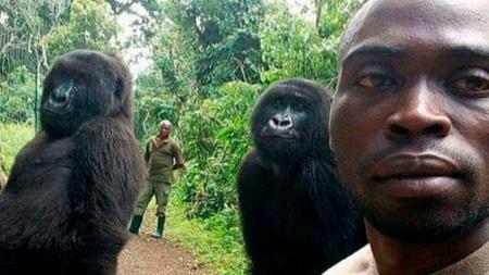 Gorilas sorprenden con su graciosa pose para un selfie en el Congo