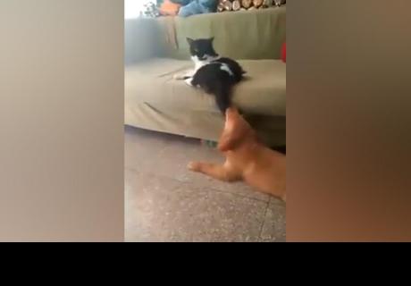 Perro jugaba con cola de gato y lo que ocurre después generó miles de reacciones